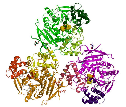Enzyme1